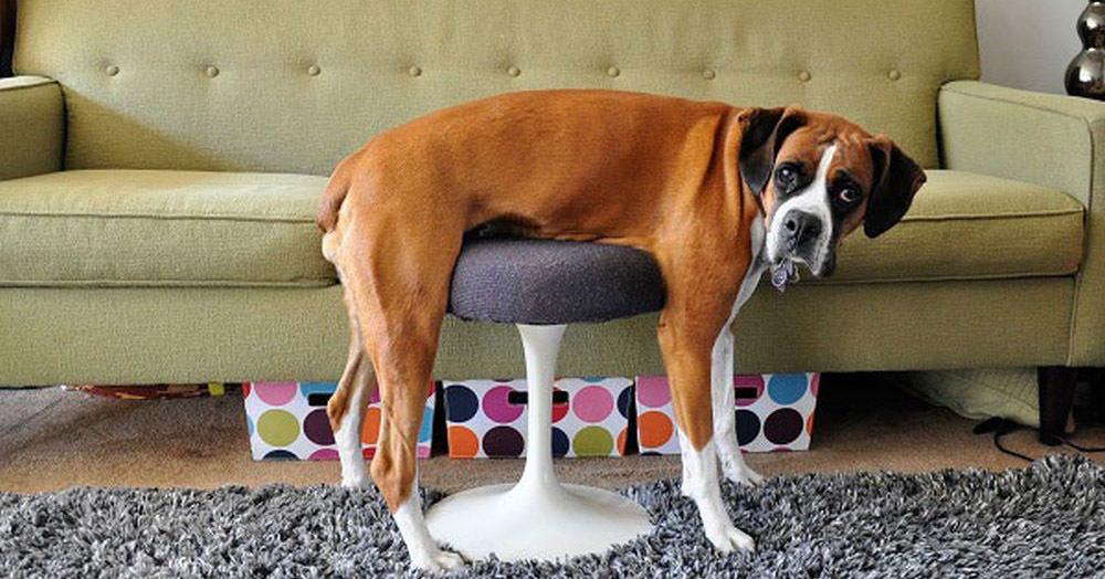 14 смешных животных, которым с трудом удается освоить мебель