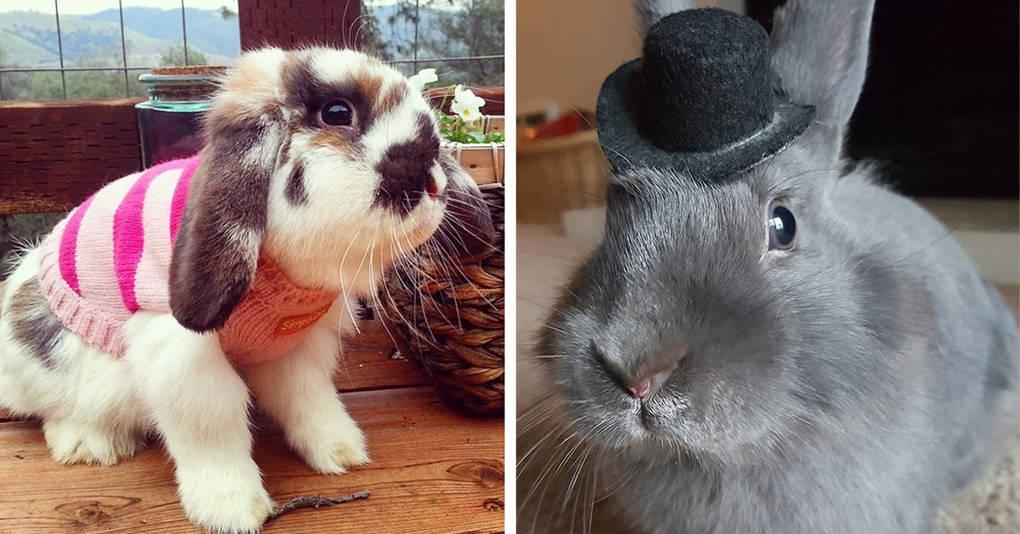 17 кроликов, которые превысили все лимиты привлекательности