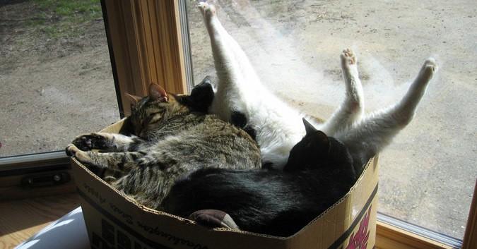 17 забавнейших фотографий, доказывающих, что коты поместятся в любую коробку