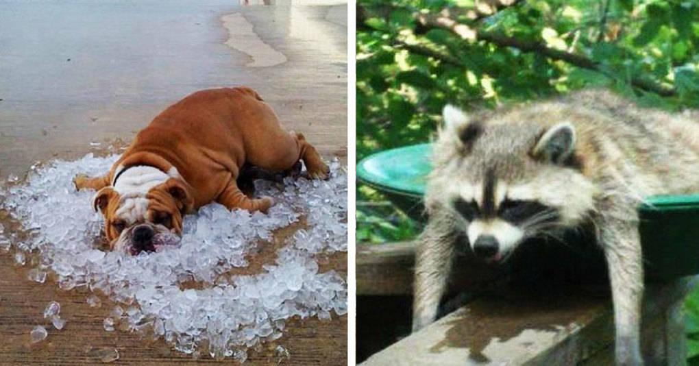 22 уморительные фотографии животных, которые ищут спасения от жары