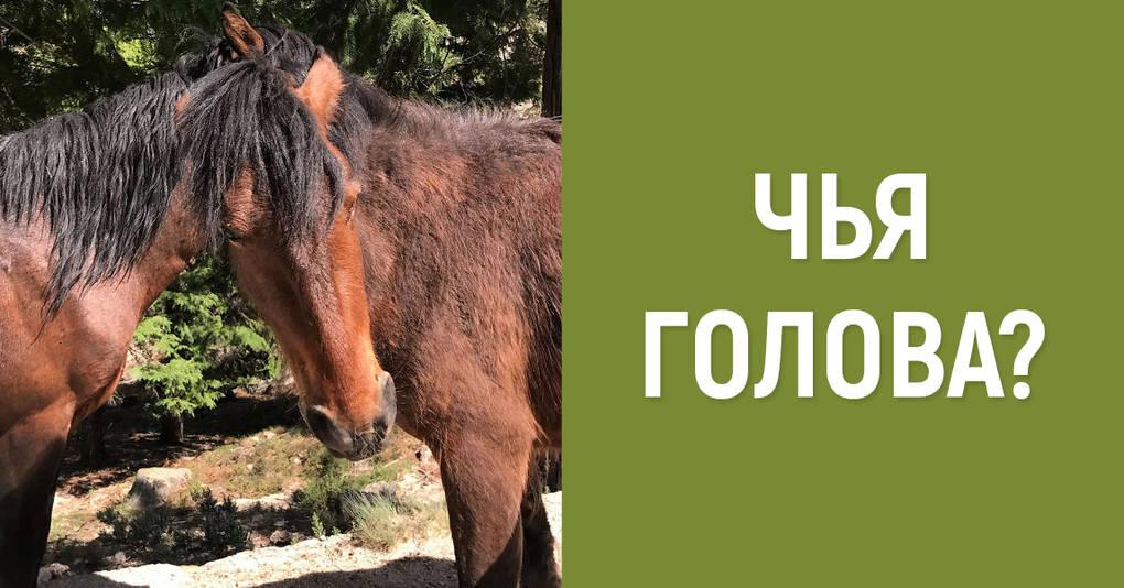 А вы можете понять, которой лошади принадлежит эта голова?