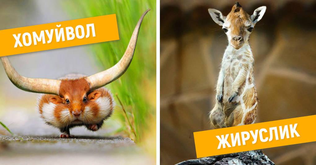 15 безумных гибридов животных, которые рассмешат вас до слёз