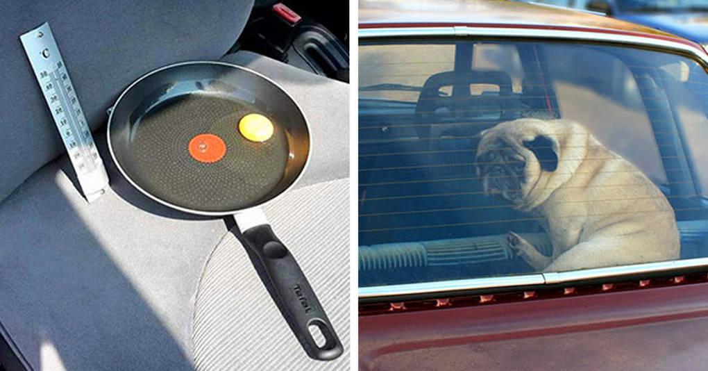 Он наглядно показал, почему нельзя оставлять свою собаку в машине в жару