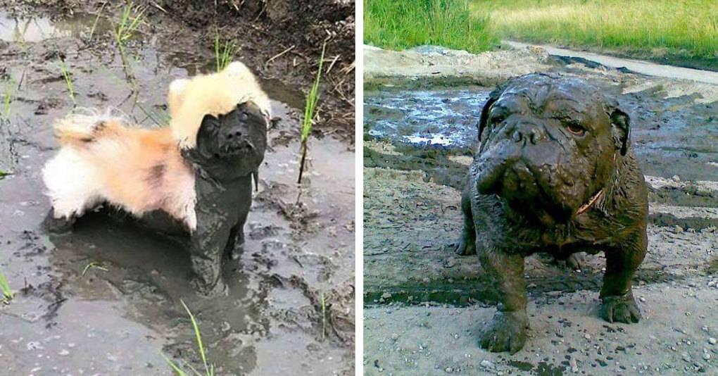 25 причин, по которым не стоит позволять собаке играть в грязи