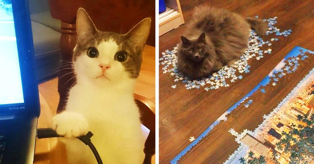 15 котов, которые совершенно не сомневаются в том, что мир крутится вокруг них