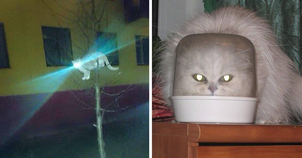 15 доказательств того, что коты — это пришельцы из космоса