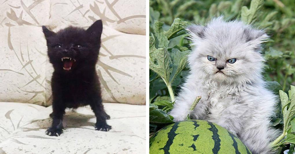 15 зловещих котят, с которыми лучше не связываться