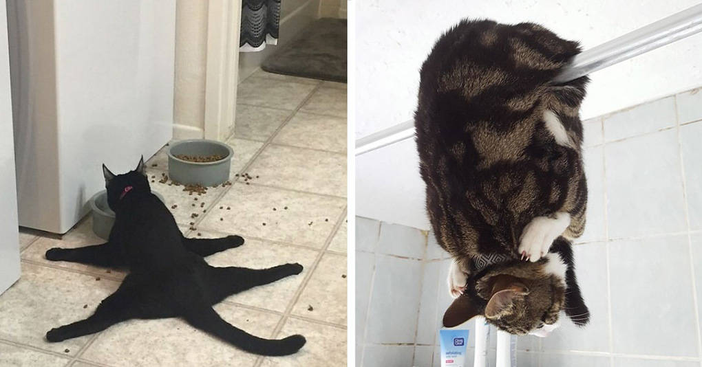 25 сумасшедших котов, которые ведут себя очень странно