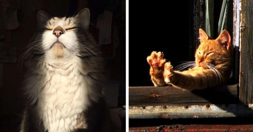 25 доказательств того, что кошки больше всего на свете обожают солнце