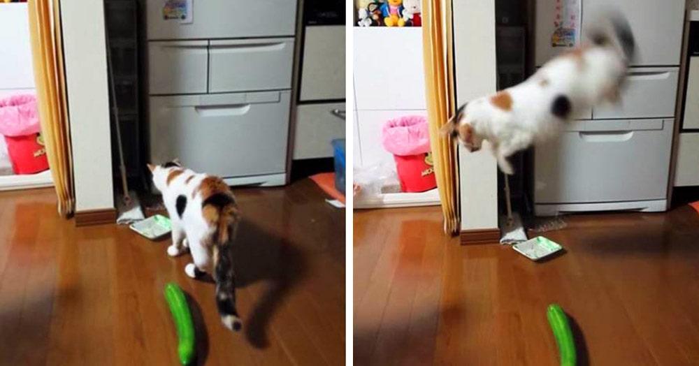 15 маленьких нюансов жизни с котами, о которых никто вам не расскажет