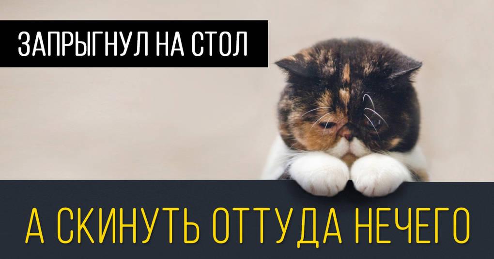 15 кошачьих поводов для грусти, о которых вы никогда не задумывались