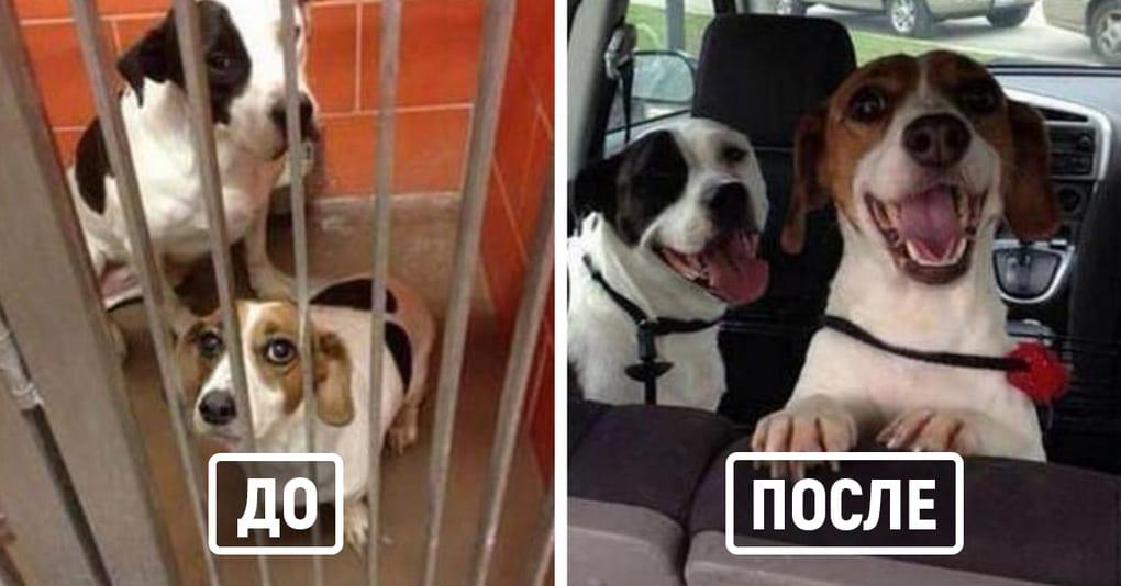 27 животных ДО и ПОСЛЕ того, как их забрали из приюта