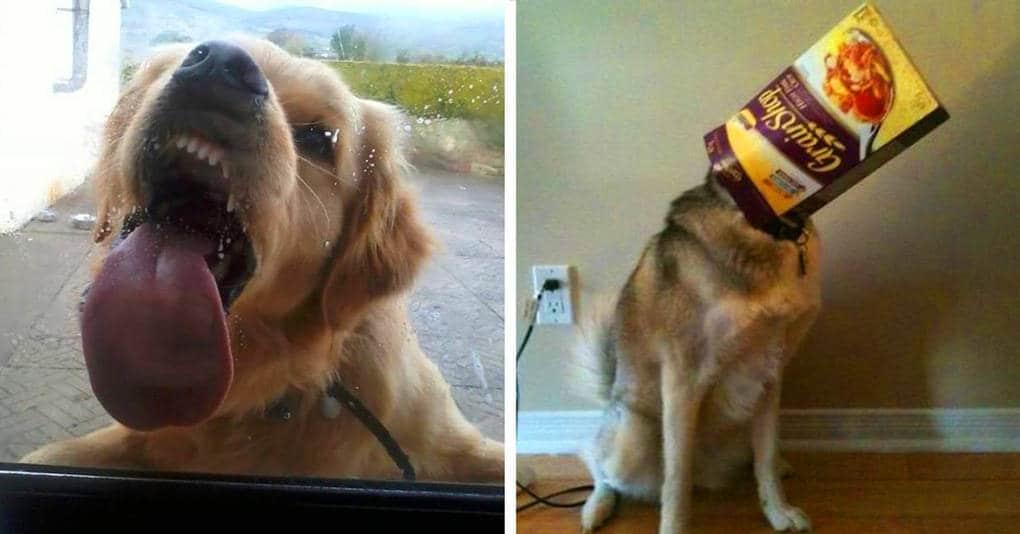 18 уморительных фотографий собак, с которыми не соскучишься