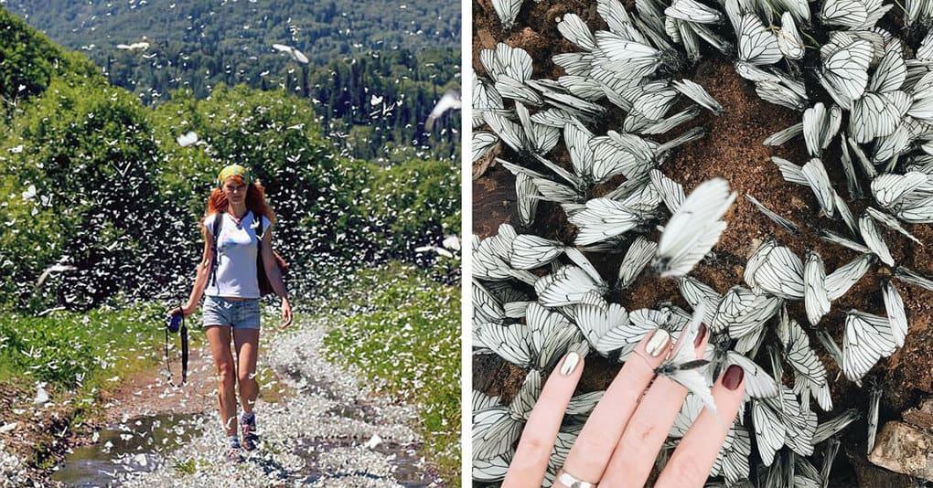 Невероятные полчища бабочек захватывают Сибирь, и такой красоты вы еще не видели