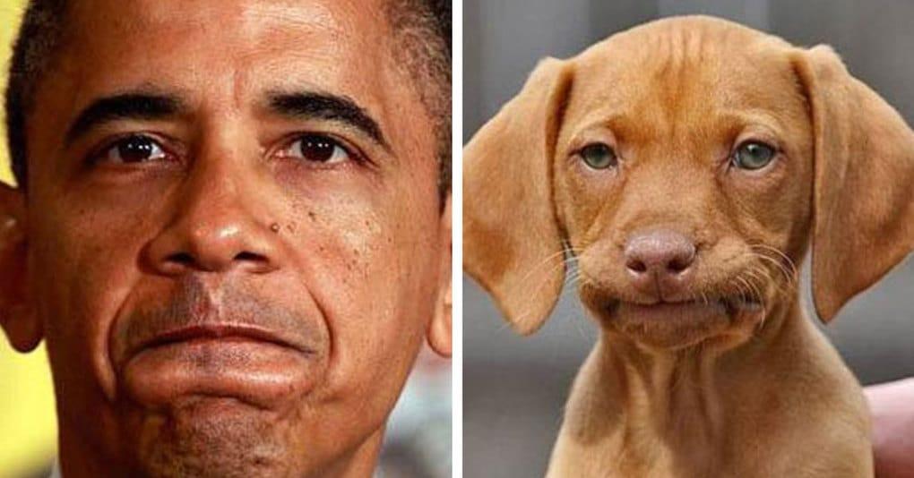 24 фотографии людей, которые доказывают, что все мы немного собаки