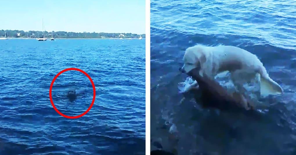 Этот пёс, рискуя жизнью, бросился в воду, и вот что он вытащил на берег