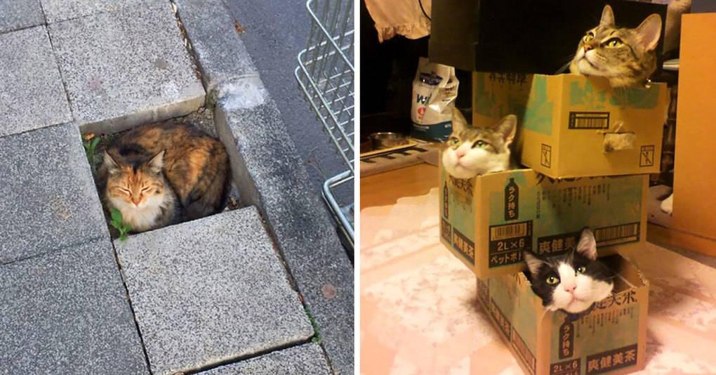 20 доказательств того, что каждая ёмкость должна быть заполнена котиком