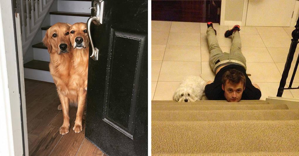 20 фееричных собачьих моментов из интернета, которые подарят вам улыбку