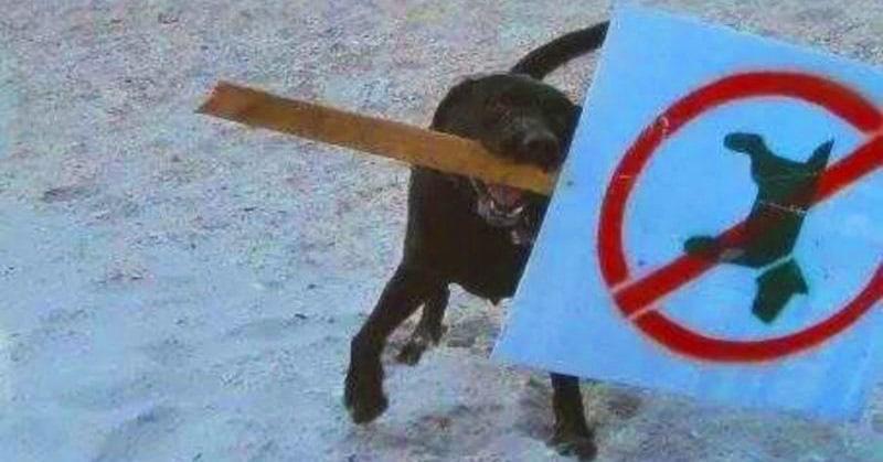 30 гордых животных-бунтарей, которым нет дела до человеческих правил