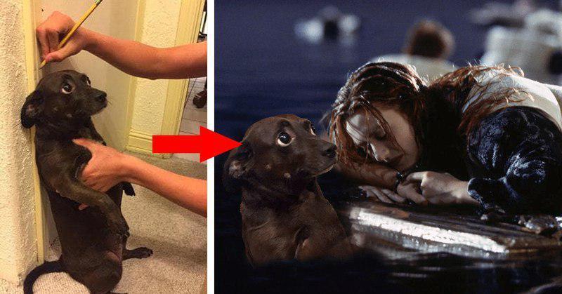 Испуганная собака стала героиней весёлого фотошоп-сражения, и вот как это выглядит