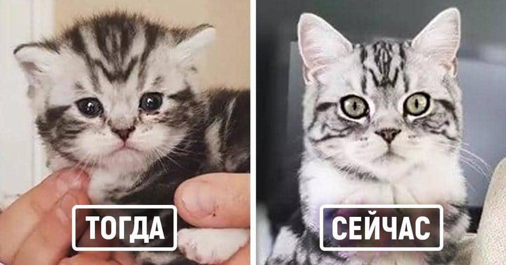 25 котов, которые решили воссоздать свои детские фотографии