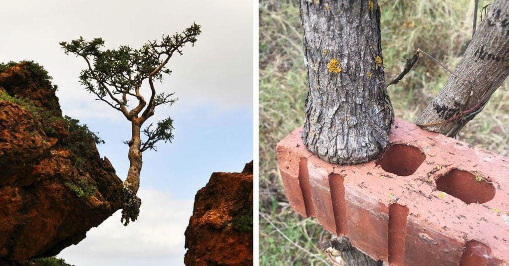 30 деревьев, которые продолжают расти несмотря ни на что