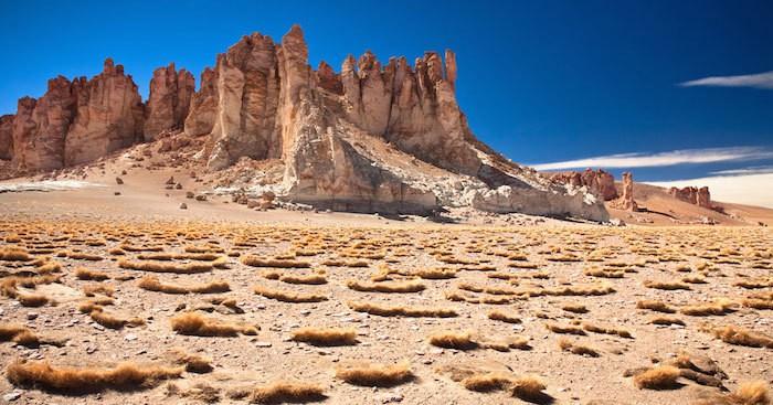 В самой засушливой пустыне мира выросли цветы и туристы не могут налюбоваться этим зрелищем