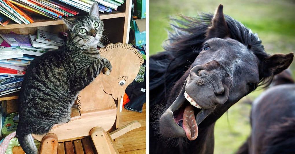 15 «удачных» фотографий, которые заставили зверей краснеть