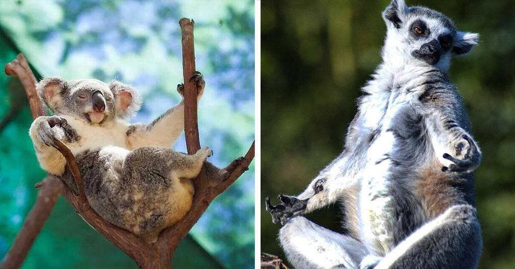 20 жизнерадостных животных на отдыхе, от одного вида которых вам станет уютно