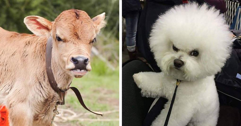 15 милых и очень недовольных детёнышей животных, которые явно не в духе