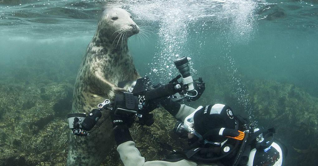Тюлень пытался украсть у дайвера камеру, а в итоге получились эти невероятные фотографии