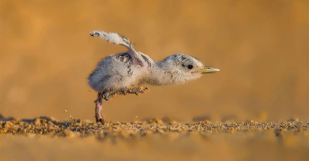 18 потрясающих снимков с конкурса фотографий птиц 2017 года, которые восхитят любого