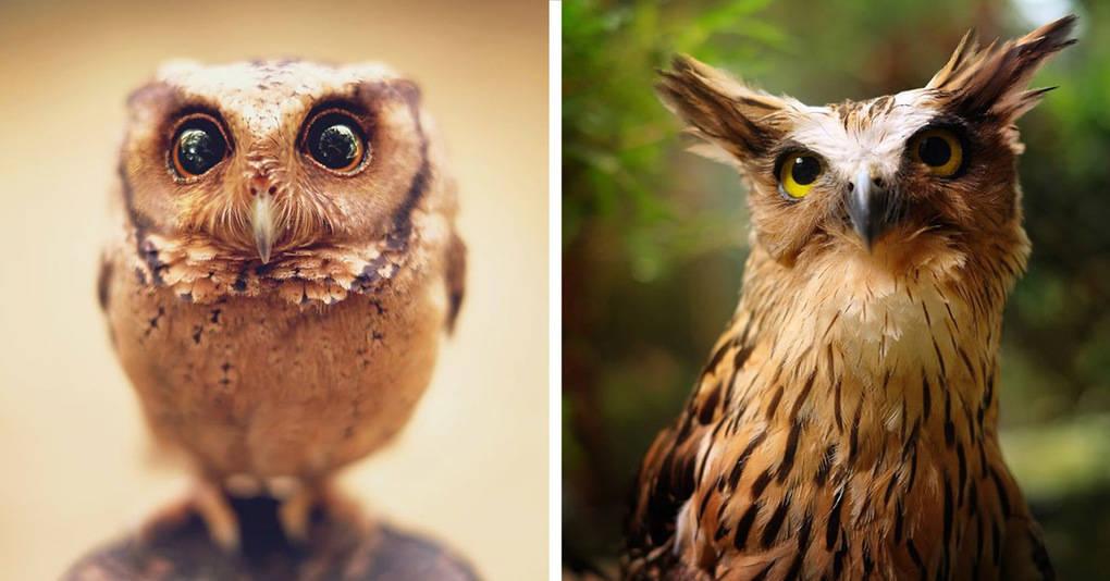 17 великолепных фотографий, раскрывающих чарующую красоту сов