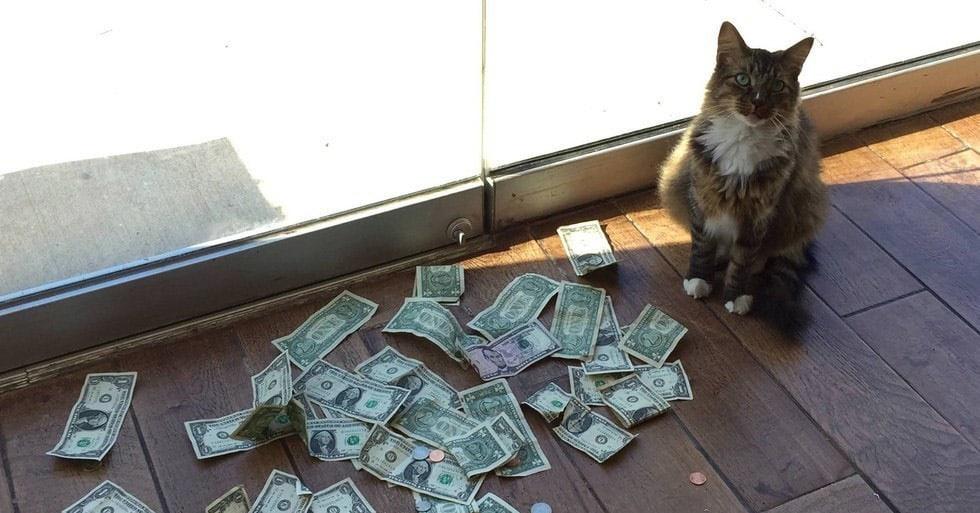 Этот котик собирает деньги на благотворительность невероятно весёлым способом