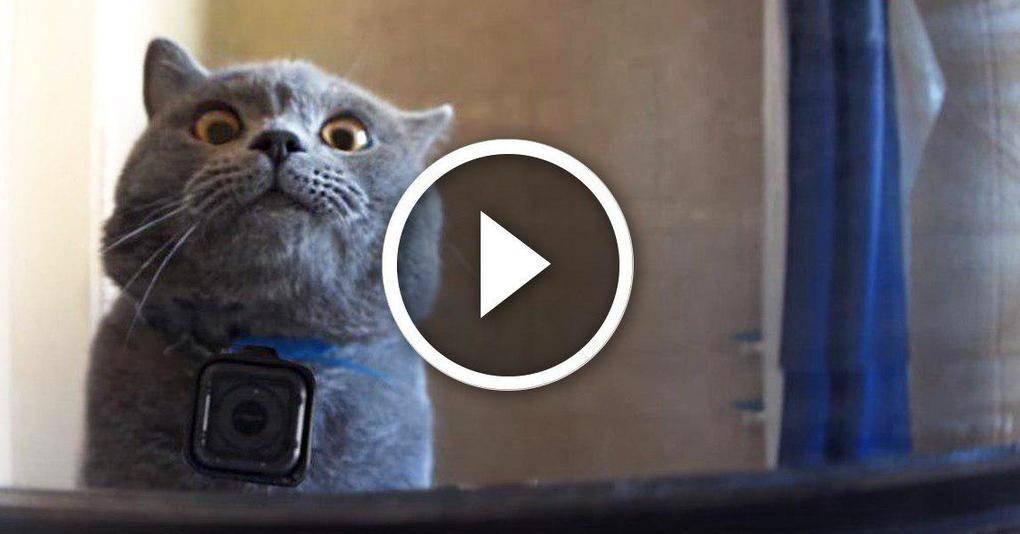 Парень решил посмотреть, что делает кот, когда его нет дома, и вы точно не угадаете, чем всё закончилось