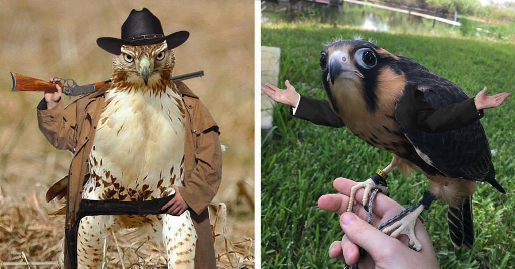 14 фото-гибридов людей и птиц, которые вас одновременно озадачат и рассмешат