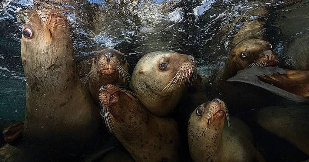 10 фотографий призёров престижного конкурса, которые раскрывают все тайны подводной жизни