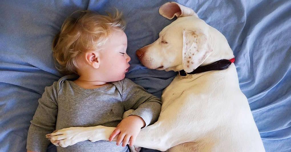 Собака с тяжёлым прошлым наконец нашла себе лучшего друга, и их фотографии заставят вас поверить в добро