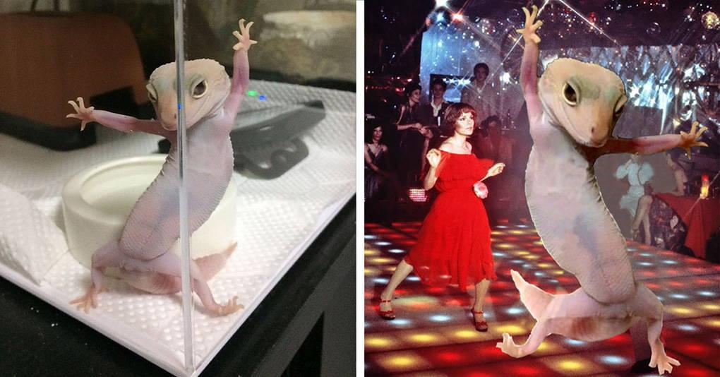 Этот великолепный геккон стал героем битвы фотошоперов, и вы не сможете перестать смеяться