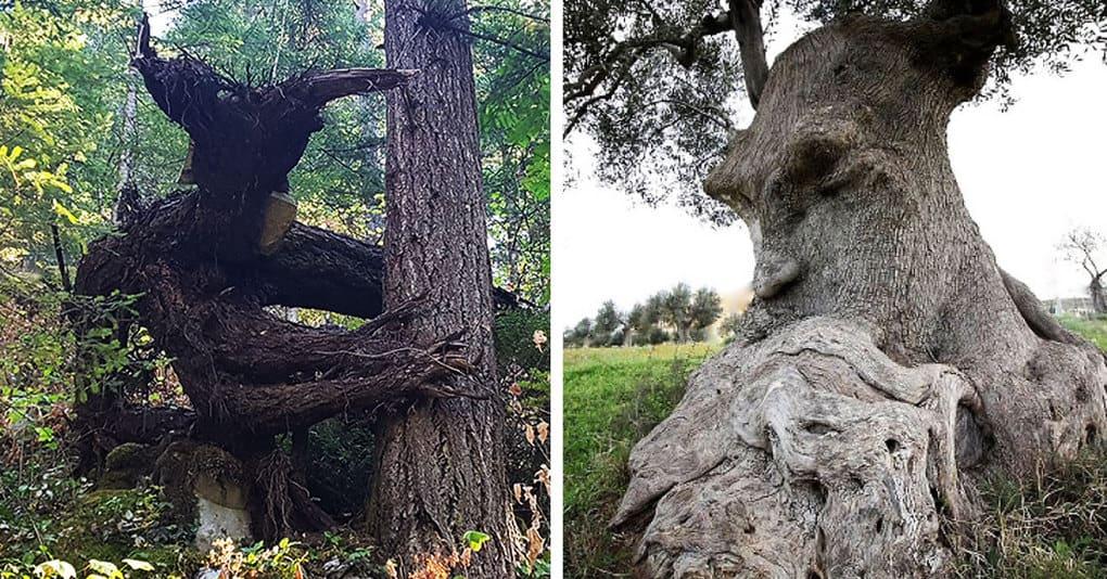 25 необычных деревьев, напоминающих что-то другое, на которые вам придётся взглянуть дважды