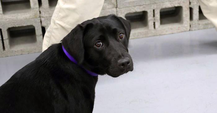 Эта собака прошла обучение в ЦРУ, но в итоге была уволена по одной забавной причине