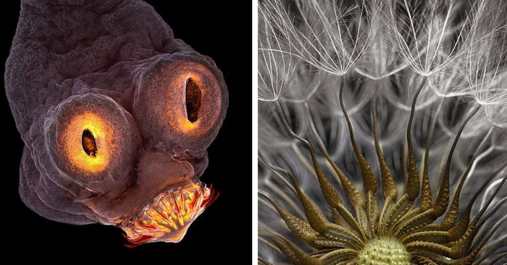 20 впечатляющих работ конкурса микрофотографии, которые покажут вам другой мир