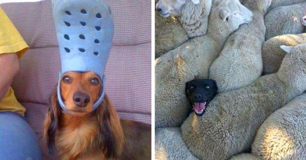 15 смешных псов, которые скрасят даже самый скверный день своими милыми выходками
