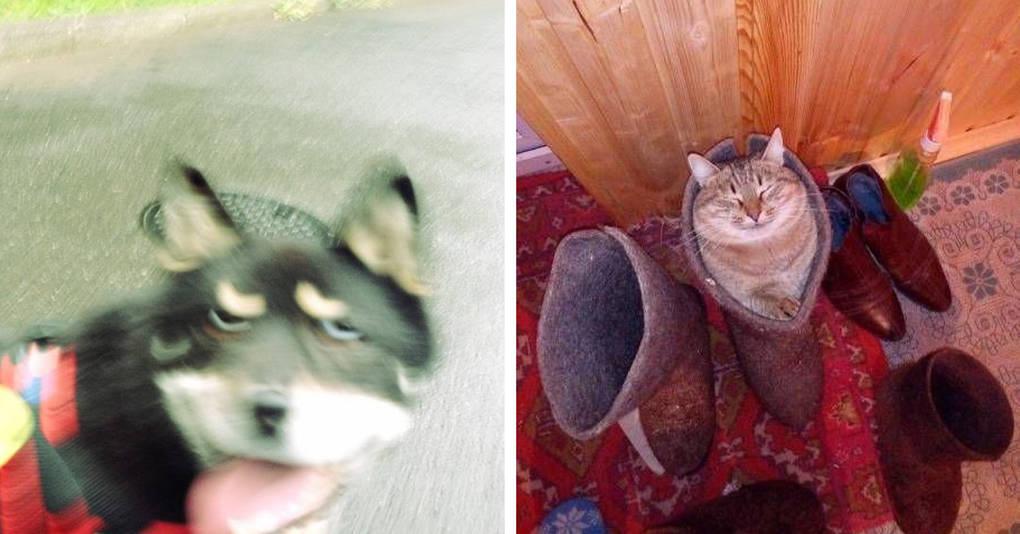17 самых странных и смешных фотографий котиков и пёсиков, которыми их владельцы решили поделиться с Интернетом