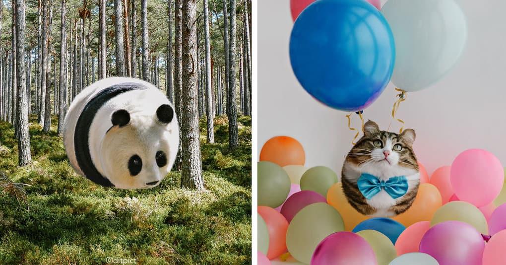 Художник представил, как будут выглядеть животные, имей они форму шара, и это очень странно