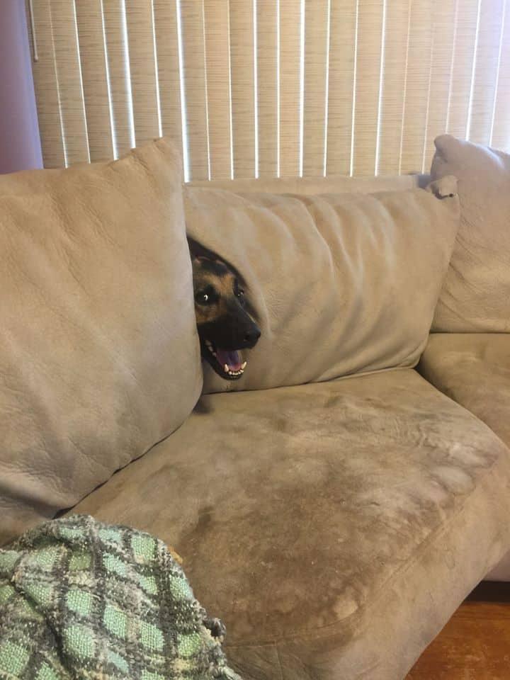 диван показалось прикольные картинки нас сайте есть