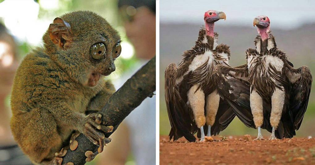 15 харизматичных животных, которые покорят вас одной своей фотографией