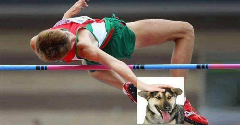 В интернете набирает популярность шутка про то, что собаку можно гладить в любой ситуации, и работы фотошоперов вас развеселят