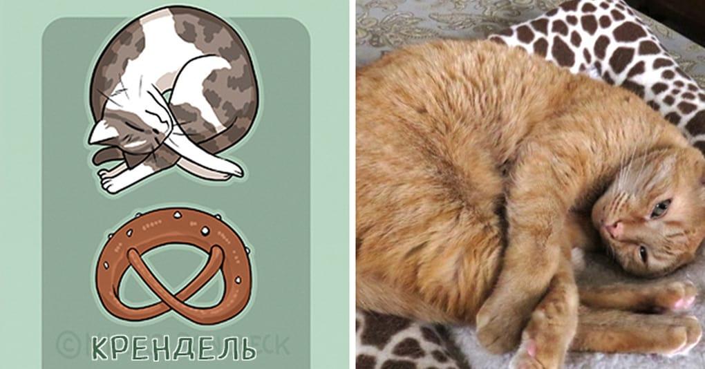 Художница заметила, что все коты похожи на хлебушек, и вот её хлебно-кошачья классификация