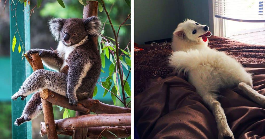 15 обворожительных животных, которые выглядят гораздо соблазнительнее, чем многие из нас